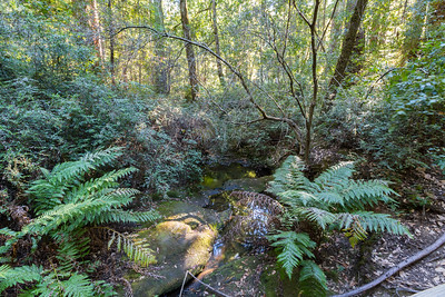 Sempervirens Creek. Big Basin State Park, CA, USA
