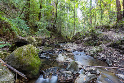 Coast Redwoods (Sequoia sempervirens) & West Waddell Creek. Skyline-to-the-Sea Trail. Big Basin State Park, CA, USA