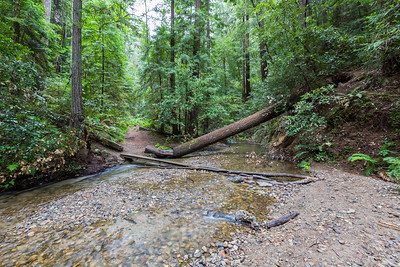 Fall Creek & Coast Redwood (Sequoia sempervirens) Forest. North Fork Trail/Fall Creek Trail. Fall Creek Unit of Henry Cowell Redwoods State Park, CA, USA