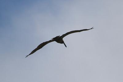 Bird. Santa Cruz, CA, USA
