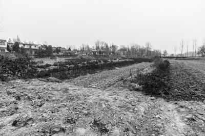 Cotton and Vegetable Fields. Hefei, Anhui, China (合肥,安徽,中国)