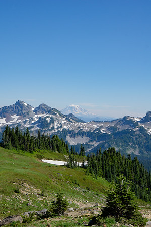 Mount Rainier Meadows
