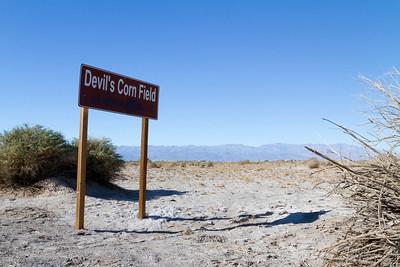 Devils Corn Field. Death Valley National Park