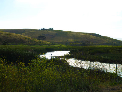Coyote Hills Regional Park - Fremont, CA