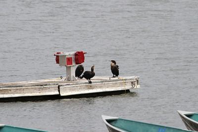 Birds. Del Valle Regional Park - Livermore, CA, USA