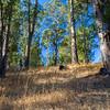 Forest. Honker Bay Trail. Lake Chabot Regional Park - Castro Valley, CA, USA