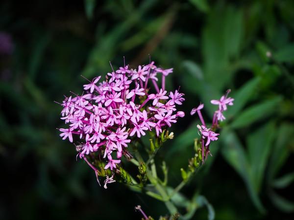 Flowers. Lake Chabot Regional Park - Castro Valley, CA, USA