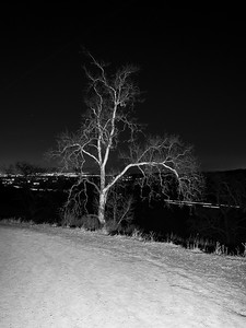 Oak Tree Trail. Pleasanton Ridge Regional Park - Sunol, CA, USA  In Background: Pleasanton, Dublin, and Interstate 680