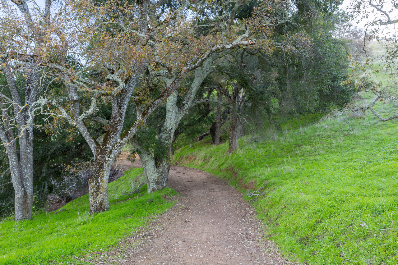 Forest. Thermalito Trail - Pleasanton Ridge Regional Park - Sunol, CA, USA
