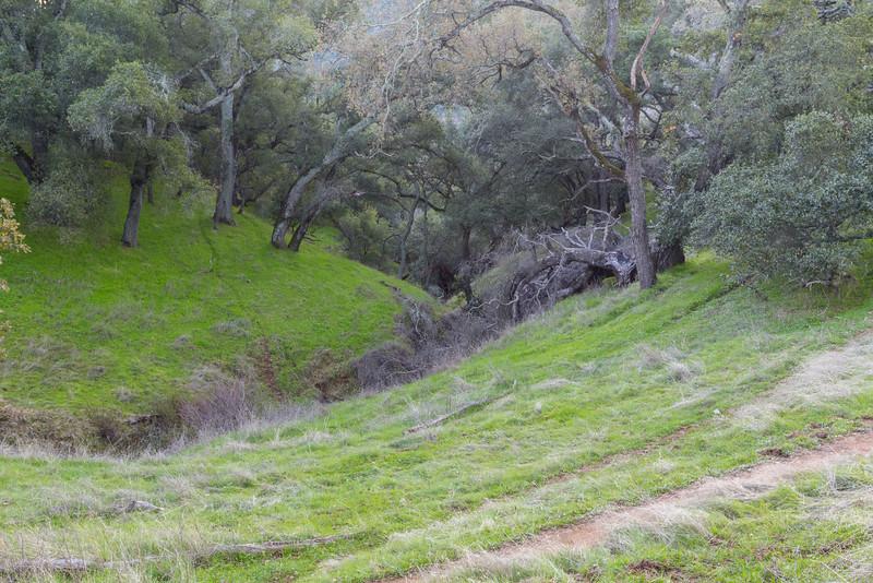 Forest. Thermalito Trail - Pleasanton Ridge Regional Park - Sunol, CA, USA