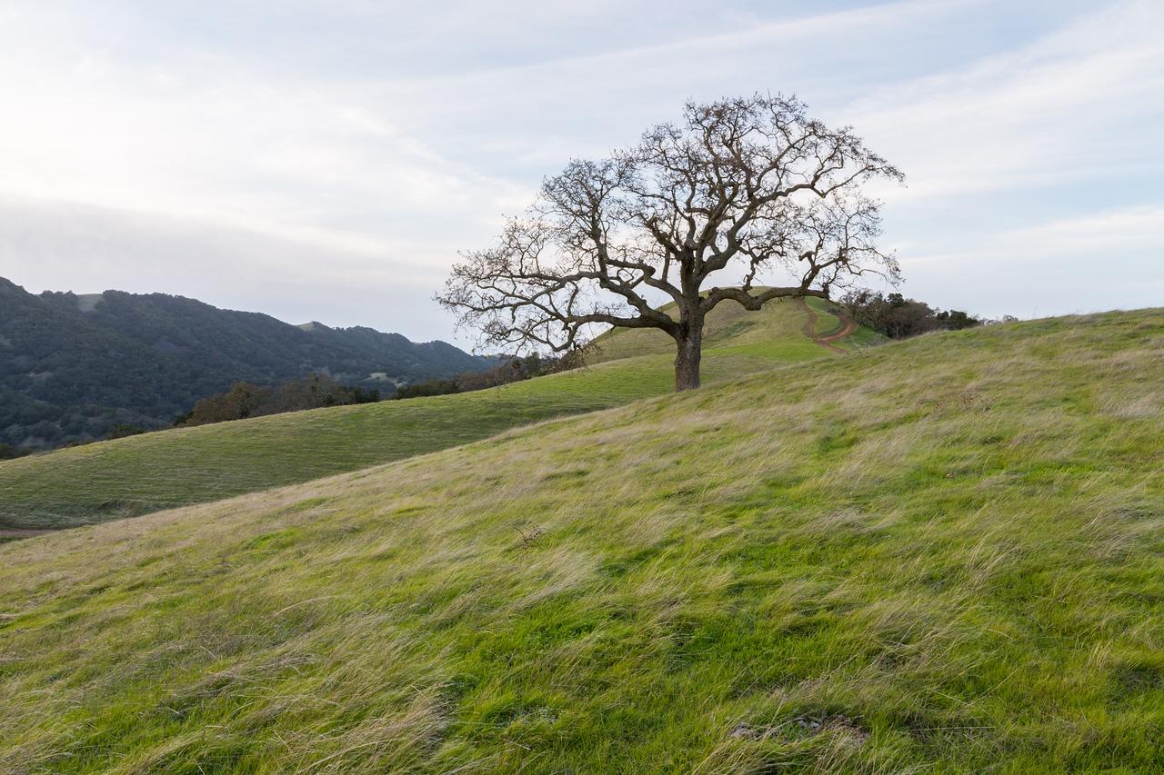 Ridgeline Trail - Pleasanton Ridge Regional Park - Sunol, CA, USA