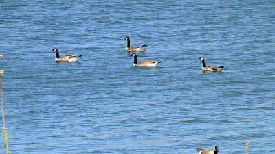 Quarry Lakes Regional Park - Fremont, CA