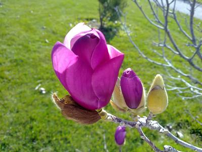 Flowers. Quarry Lakes Regional Park - Fremont, CA, USA