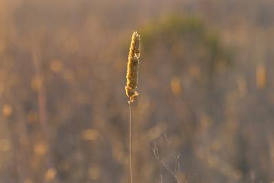 Grass. Quarry Lakes Regional Park - Fremont, CA, USA