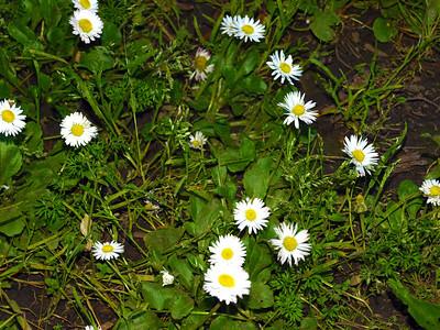 Flowers. Redwood Regional Park - Oakland, CA, USA