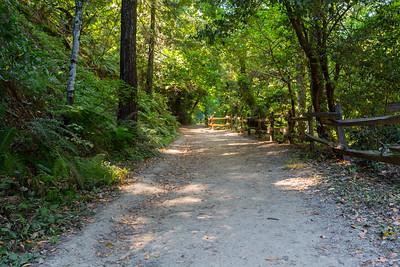 Forest. Redwood Regional Park - Oakland, CA, USA