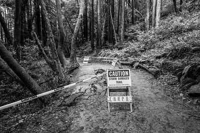 Storm Damaged Trail & Coast Redwood (Sequoia sempervirens). Stream Trail. Redwood Regional Park - Oakland, CA, USA