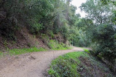 West Ridge Trail Trail. Redwood Regional Park - Oakland, CA, USA