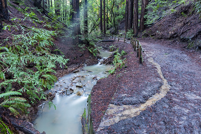 Redwood Creek & Coast Redwood (Sequoia sempervirens). Stream Trail. Redwood Regional Park - Oakland, CA, USA