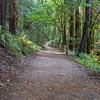 Coast Redwood (Sequoia sempervirens). Redwood Regional Park - Oakland, CA, USA