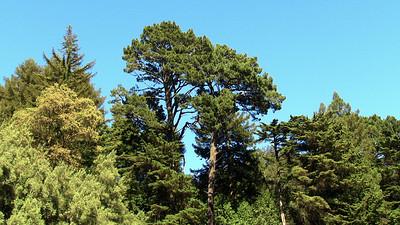 Redwood Regional Park - Oakland, CA, USA