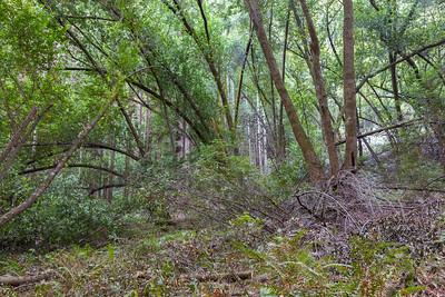 Forest. Stream Trail. Redwood Regional Park - Oakland, CA, USA