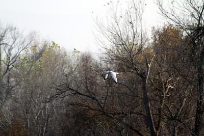 Bird. Shadow Cliff Regional Park - Pleasanton, CA, USA
