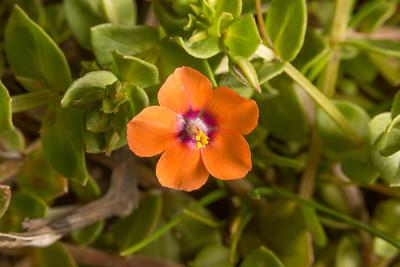 Flowers. Shadow Cliff Regional Park - Pleasanton, CA, USA