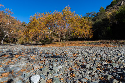 Autumn Foliage. Creek Bed of Alameda Creek. Sunol Regional Wilderness - Sunol, CA, USA