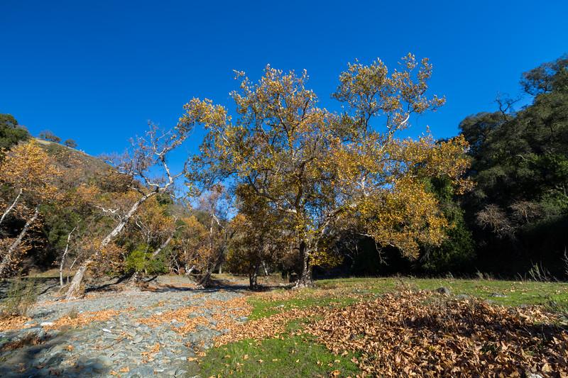 Autumn Foliage. Creek Bed of Alameda Creek. Sunol Regional Wilderness - Sunol, CA, USA