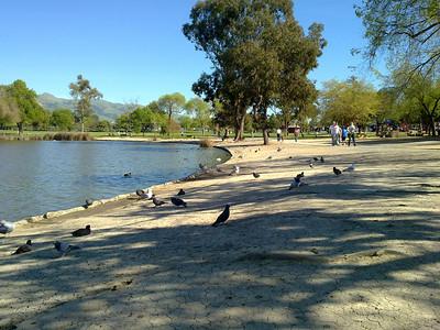 Birds. Lake Elizabeth/Fremont Central Park - Fremont, CA, USA