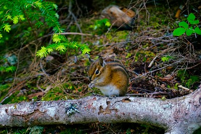 Alvin the Chipmunk