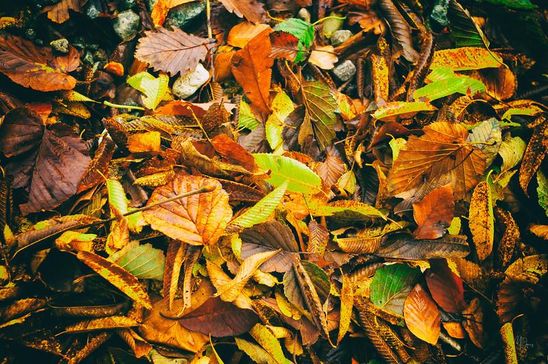 DSC_2566-Nikko_Forest_Floor_in_October