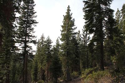 Lake Tahoe, CA/ NV, USA