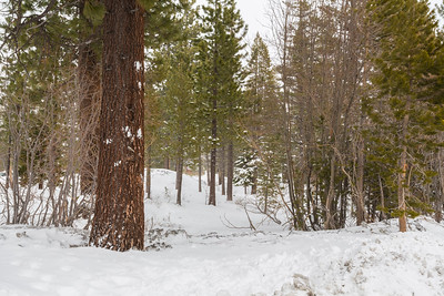 Forest. Parking Lot for Tahoe Donner Ski Area - Truckee, CA, USA