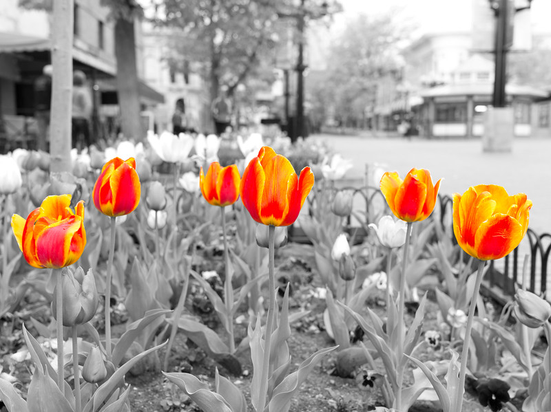 SELECTIVE COLOR 2 OF 2