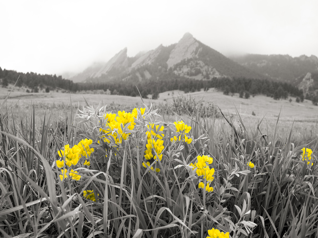 SELECTIVE COLOR 1 OF 2