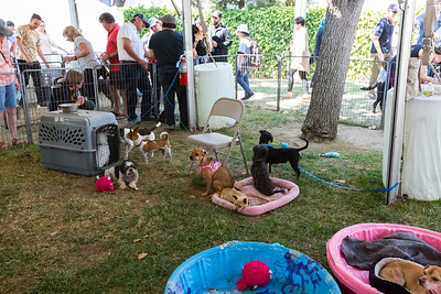 Dogs. Bay Area Pet Fair 2017 - Alameda County Fairgrounds - Pleasanton, CA, USA
