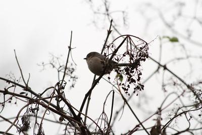 Birds. Arroyo Del Valle Trail - Pleasanton, CA, USA