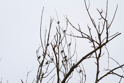 Birds. Arroyo Del Valle Trail - Pleasanton, CA, USA
