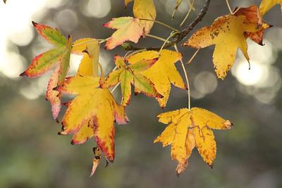 Autumn Foliage. Arroyo Del Valle Trail - Pleasanton, CA, USA