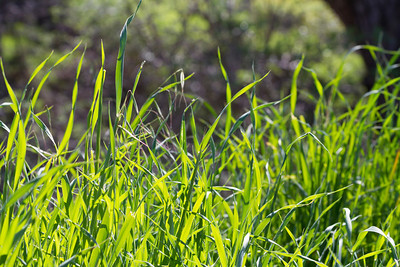 Grass. Arroyo Del Valley Trail - Pleasanton, CA, USA