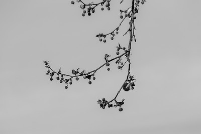 Trees. Hansen Park - Pleasanton, CA, USA