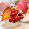 Berries. Pleasanton, CA, USA