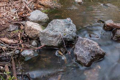 Arroyo Del Valle Creek. Arroyo Del Valle Trail - Pleasanton, CA, USA