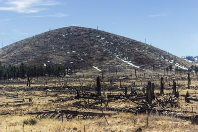 Forest Fire. Destruction