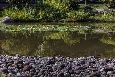 Rocks by the Pond