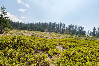 Bunny Flat. Shasta National Forest - Mount Shasta, CA, USA