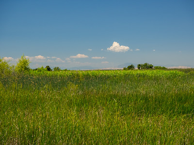 Dow Wetlands Preserve. Antioch, CA, USA