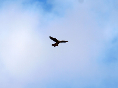 Bird. Fremont Mission Peak - Fremont, CA, USA